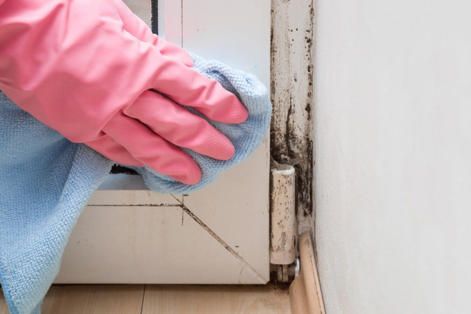 Everything You Need to Know About Mold in the Home